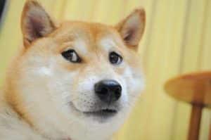 Dogecoin tem processado mais pagamentos