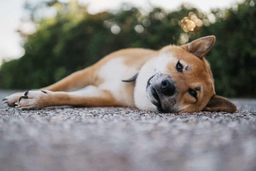 Dogecoin perde seu brilho com repressão da Tailândia