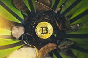 Plantação de árvores corresponderão ao gasto do Bitcoin ETF